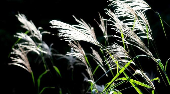 Amores e ilusiones para que las recoja el viento